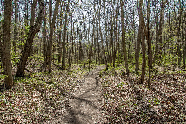 Versailles State Park - Fallen Timbers Trail - April 26, 2014