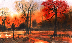 Autumn Haze - Watercolour (elliott.lani) Tags: autumn red orange color colour art nature forest painting outdoors bush scenic autumncolours watercolour colourful lani allrightsreserved autumnscene burntsienna elliottlani lanielliott