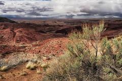 (Tomoius) Tags: arizona usa storm landscape weird nationalpark spring desert documentary painteddesert straight petrifiedforestnationalpark fujinonxf1855mmf284 tomaspetkus fujifilmxpro2