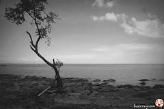 Pantai Dandulit (Dandulit Beach), Mile 16 Sandakan, Sabah (fikqriey_94) Tags: nature malaysia sabah naturalist sandakan sabahan aramaiti cuticutimalaysia tourismmalaysia photolicious sabahtanahairku eastsabah sabahtanahtumpahnyadarahku proudtobesabahan pantaidandulitsandakan