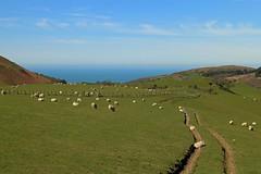 Stuck in a Rut (RoystonVasey) Tags: wales canon happy eos sheep zoom m valley lamb 1855mm stm snowdonia cwm aberdovey aber ewe snp dyfi maethlon