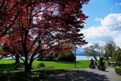 zugerland_069_28042016_11'52 (eduard43) Tags: trees lake tree see bume baum cham zugersee 2016 villettapark