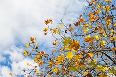 IMG_8876 (gsreejith) Tags: autumn colors colours leura