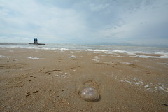 Beach scene. (Azariel01) Tags: people mer beach clouds see jellyfish belgium belgique belgie north zee scene nuages plage personnes nord noord koksijde 2016 meduse coxyde scne changingweather tempschangeant
