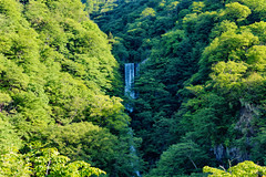 (Moru.) Tags: green forest waterfall woods  verdure   waterflow