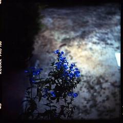 ( prindu | JIWA) Tags: 120 6x6 tlr film analog mediumformat kodak 120film squareformat mf negativescan yashica kodakfilm yashicamat124g twinlens kodakektacolorpro160 megat canoscan8800f filmnotdead yashinon80mm35 megatrikhailwindzar smellyplastik windzar studio1982 photophobiaz ym124g