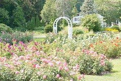 11816217_10153099686622076_5036005875506923138_o (jmac33208) Tags: park new york roses rose garden central schenectady