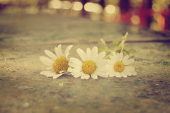 my three kids (Ayeshadows) Tags: light daisies forest three bokeh low