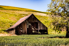 Natural Skylights (Culinary Fool) Tags: palouse usa washington crop 2016 roadtrip rollinghills tree barn wa brendajpederson travel field photography dilapidated hills farm ranch may culinaryfool travelwa 2470mm28