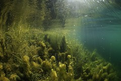 IMG_4377 (Andrey Narchuk) Tags: russia moscow freshwater green underwater weed tree