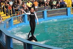 IMG_4306 (owiman) Tags: animals killerwhale keybiscayne 2012 seaquarium