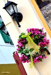 μαγιατικο στεφανι (dimitra_milaiou) Tags: world life street city pink flowers colour nature colors smile up lines architecture greek 1 spring still nikon europe looking 1st d may hellas diagonal greece greenlight 90 hung 2012 nafplio nauplio peloponissos dimitra nauplion d90 ροζ ελλαδα λουλουδια πρωτομαγια ναυπλιο πρασινο πελοπονησσοσ μαιοσ μαιου χρονια πολλα πελοπόνησσοσ δημητρα στεφανι milaiou μηλαιου μαγιατικο κορδελλα