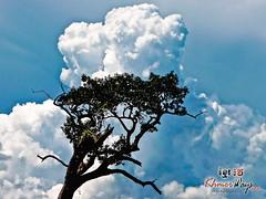 Tree Clouds- Koh Ker.jpg
