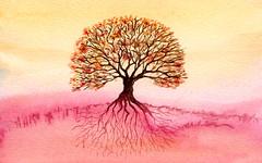 albero 7