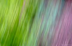 Blur (Jim Frazier) Tags: park desktop wallpaper usa white abstract texture gardens museum canon botanical illinois background dupage powershot il botanic minimalism winfield botanicgarden horticulture preserve botanicalgarden powerpoint minimalist whitewall wheaton publicgarden lightroom cantigny q2 dupagecounty cantignypark s95 stjamesfarm ldjuly jimfraziercom ld2012