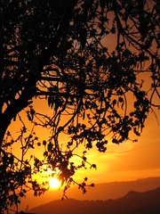 Puesta de sol a travs del almendro - Sunset (perlaroques) Tags: sunset espaa naturaleza color nature photo twilight spain dusk puestadesol crepusculo canaryislands islascanarias fotografa colorido penumbra kanarischeinseln
