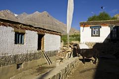 Life (Sunil Parashar) Tags: life roof house beautiful season village flat best 1224mm himachal spiti kaza pinvalley kungri d7000