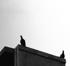 top of the world (Vijay1793) Tags: summer building birds canon afternoon pigeon flikraward a2200