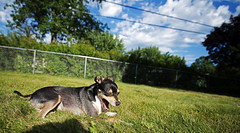 Dog Day Afternoon (Dusty J) Tags: dog nikon terrier jackrussell d800 1424