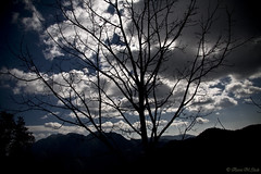 Nature's Drama (aleemsm) Tags: sky black tree silhouette evening bhutan dramatic drama