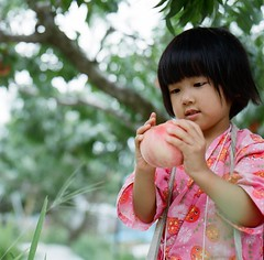 *peach picking (fangchun15) Tags: 120 6x6 film kodak hasselblad portra400 anri