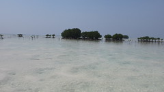 Pantai dangkal