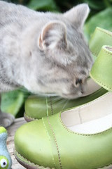 018 (piaktw) Tags: green leather cat kitten recycled rubber maryjanes sole eco britishshorthair 2012 applegreen elnaturalista tesela got luddkolts bluetortiespotted gotalnwick
