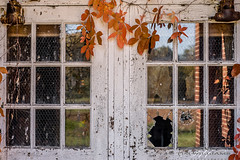 Doors to the past (Tim_Williams) Tags: old school windows glass leaves paint doors