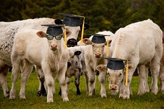 Graduating class of 2012 from the Pasture Institute (Chizuka2010) Tags: fauna faune photographieanimalière sognidreams canoneos60d mygearandme blinkagain pastureinstitute graduatingclassof2012