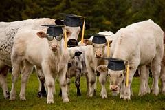 Graduating class of 2012 from the Pasture Institute (Chizuka2010) Tags: pastureinstitute graduatingclassof2012 sognidreams blinkagain mygearandme canoneos60d fauna faune photographieanimalière graduating class graduatingclass