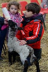 Harry and Bella Feeding a lamb (Rivertay07 - thanks for over 3 million views) Tags: rivertay norfolk harry lamb isabella copyrightprotected richardstead snettishampark