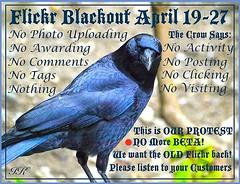 Blackout Crow (Irene, W. Van. BC) Tags: black birds crows protests blackbirds birdsofafeather badflickr protestposters oldflickr birdsintrees flickrprotests betaflickr wewanttheoldflickrback allprotests rubyawardsinvitation blackflickrdays flickrblackoutapril19272014 flickrblackouts nophotopostsawardscomments
