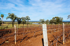 Scarborough Vineyard, Hunter Valley (mdekauwe) Tags: tree green digital landscape vineyard wine australia wideangle newsouthwales scarborough grape huntervalley nikond600 nikon1635mmf4
