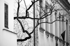 Tree and Black Flag (SusanSprach) Tags: tree flag krakow