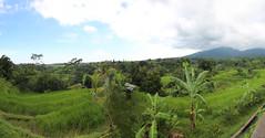 Jatiluwih Rice Terrace Panorama (Wormey) Tags: bali indonesia photoshopped 2016 stitchedpanorama canon650d