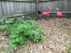 "Flowers and Flamingos • <a style=""font-size:0.8em;"" href=""http://www.flickr.com/photos/109120354@N07/26513198094/"" target=""_blank"">View on Flickr</a>"