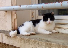 Yeux ferms (MAPNANCY) Tags: chat noir campagne fentre blanc barre volet