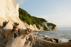 Buchenholz am Strand (Caora) Tags: germany buchenwald nationalpark unesco rgen whitecliffs buchen kreidekste jasmund