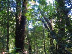 Queulat Park (Ratee Rats) Tags: chile park parque patagonia canon national nacional aysen queulat sx50hs