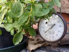 green temperature (J.Jake) Tags: temp light urban plant green beauty rock daylight close thermo type temperature
