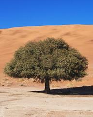 Namib Tree (Dan de Kadt) Tags: leica desert olympus omd namib namibdesert em5 namibiandesert 25mmf14 summilux25mm pl25mmf14 panaleica25mm 25mmsummilux olympusomd olympusem5 namibianwinter