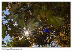 Sunburst Nature (Paul Simpson Photography) Tags: nature leaves sunshine weather lincolnshire sunburst newleaves niceweather northlincolnshire photosof imageof photoof imagesof sonya77 paulsimpsonphotography may2016