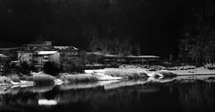 Lakeshore (OrangeK7) Tags: blackandwhite bw lake reflection reed monochrome japan nikon lakeshore lakeview