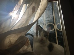 Aaa (emrahzdemir1) Tags: window cat retro kedi pencere