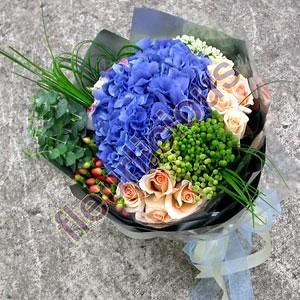 trixi blue