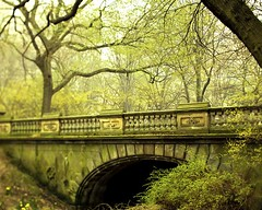 Foggy Central Park, in green ([ r  c e y t  y ] {I brke for bokeh}) Tags: mist green fog moss centralpark etc treest bestestevar gladearch newyorkcityraceytayetsycom moargreenstuff