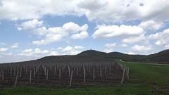 Vršački vinogradi (Salleps) Tags: vineyard vino vojvodina srbija banat vrsac vinogradi vrsackivinogradi vrsackeplanine vrsacvineyards vinovaloza vrsackovino