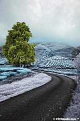 Sg Palas Tea Plantation (Infrared) (2121studio) Tags: nature sunrise dawn nikon ali malaysia indah cameronhighlands kuantan alam malaysianphotographer drali sgpalasteaplantation 2121studio kuantanphotographer pahangphotographer ciptaanallahswt 0139342121 nubleebinshamsubahar