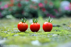 .... (nodie26) Tags: red food fruits vegetables fruit tomato dish fresh greens vegetarian dishes veg    vegetarianism