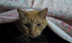 Freeze frame from video (Hairlover) Tags: cats public cat kitten kitty kittens kitties allcatsnopeople